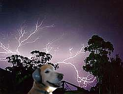 MuttMuffsGewitter