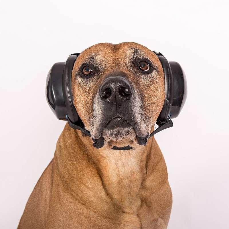 Hundegehörschutz - MuttMuffs