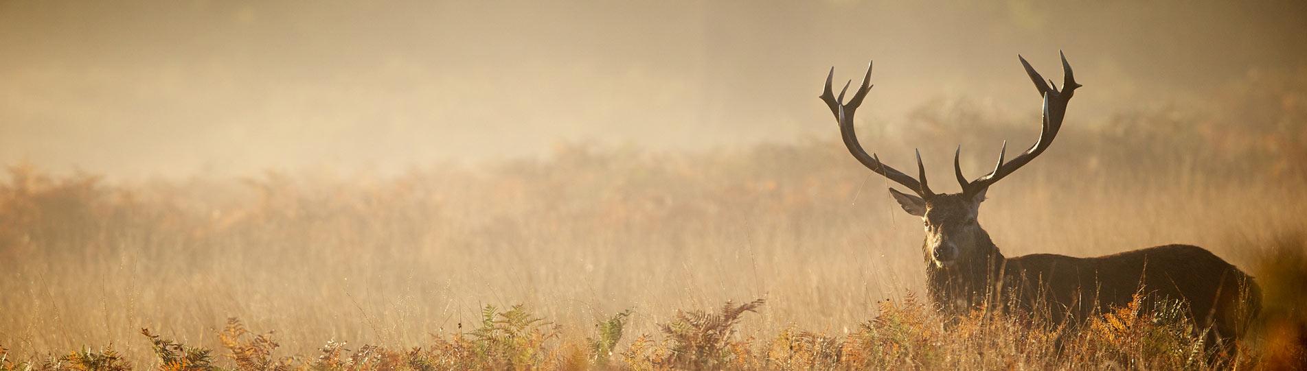 Jagd Gehörschutz